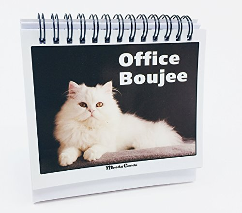 Office Gift for Cat Lovers - Moodycards! Make Everyone Laugh with These...