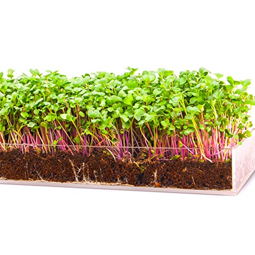 Grow 'n Serve Microgreen Kit – Attractive Table Centerpiece Planter...