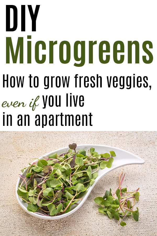 """Text """"diy microgreens - how to grow fresh veggies, even if you live in an apartment"""" with a picture of microgreens"""