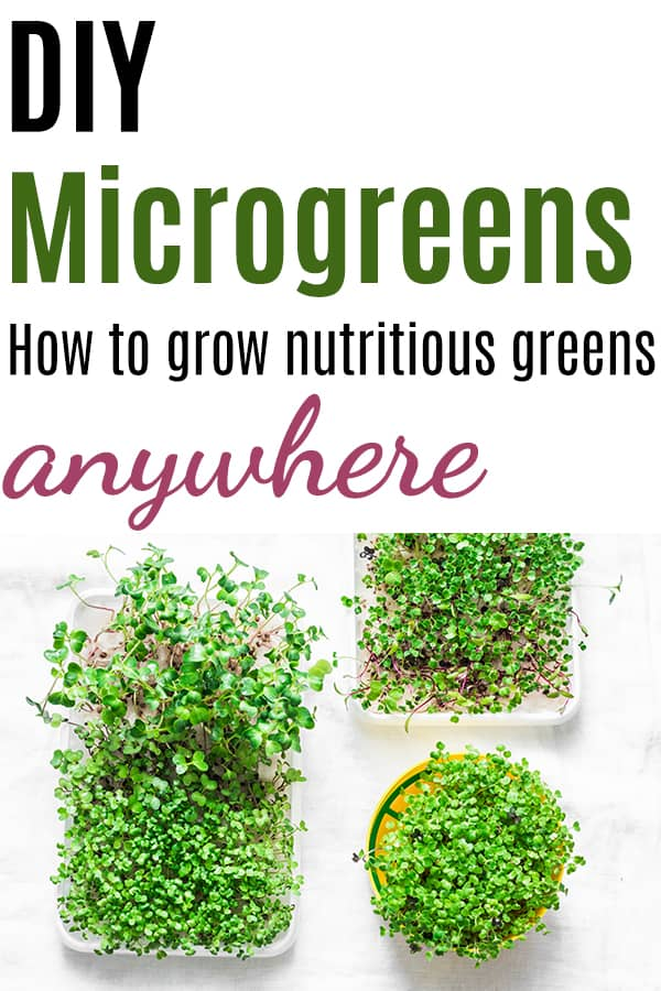 """Text """"diy microgreens - how to grow nutritious greens anywhere"""" with a top down photo of three microgreen containers"""