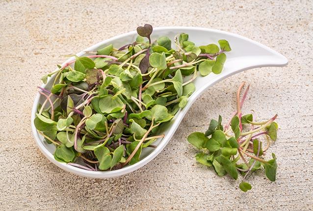 fresh microgreens on a spoon