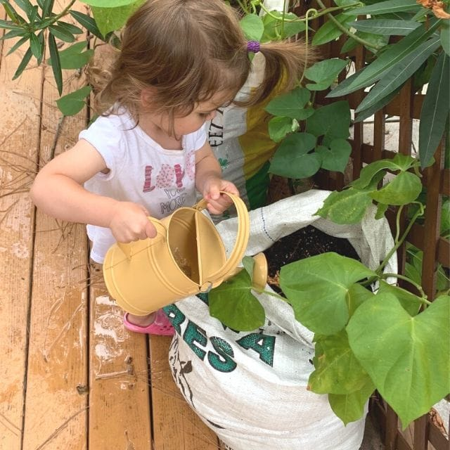 toddler using a yellow watering can to water potatoes growing in a feed bag