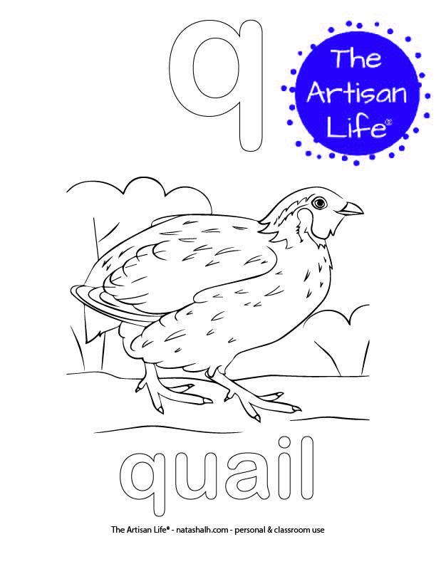 Coloring page with a lowercase bubble letter q and quail in bubble letters and a picture of a qail to color